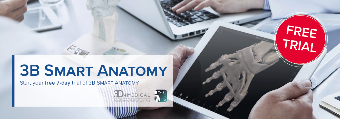 3B Smart Anatomy Banner seven day trial