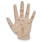 1004930: Acupuncture model of the hand