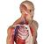 Licence Complete Anatomy - Educator, 10261 [CA-EDU], Complete Anatomy (Small)