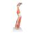 Muscles de la jambe, en 9 parties - 3B Smart Anatomy, 1000351 [M20], Modèles de musculatures (Small)