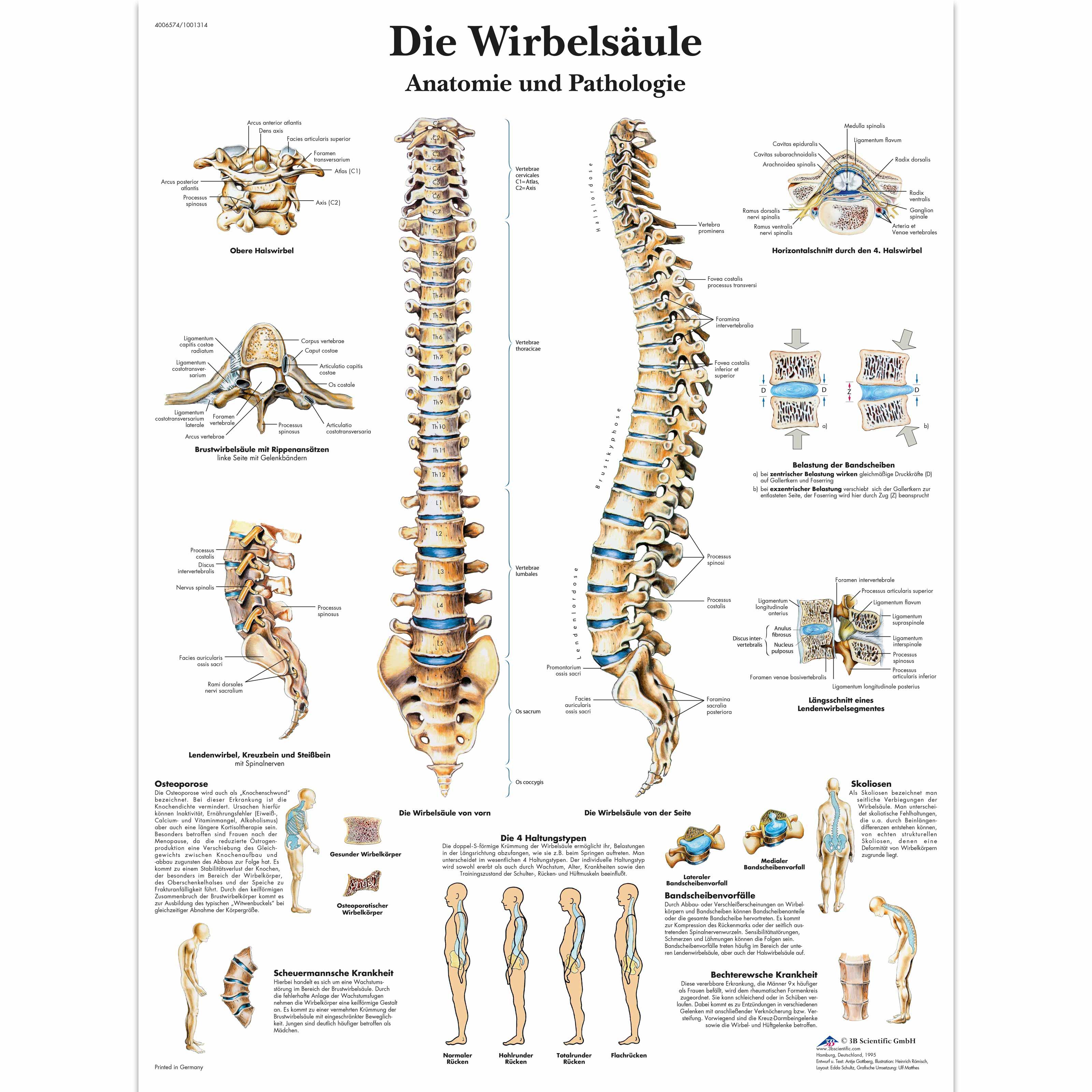 Berühmt überleben Anatomie Und Physiologie Fotos - Menschliche ...