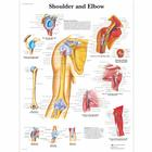 Shoulder and Elbow, 1001482 [VR1170L], système Squelettique