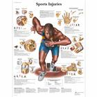 Sports Injuries, 1001494 [VR1188L], Muscle
