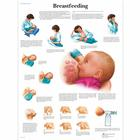 Breastfeeding, 4006706 [VR1557UU], Éducation parentale