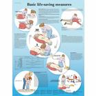 Basic Life Support, 4006725 [VR1770UU], Accessoires de RCP