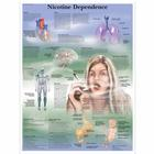 Nicotine Dependence, 4006728 [VR1793UU], Éducation Tabac