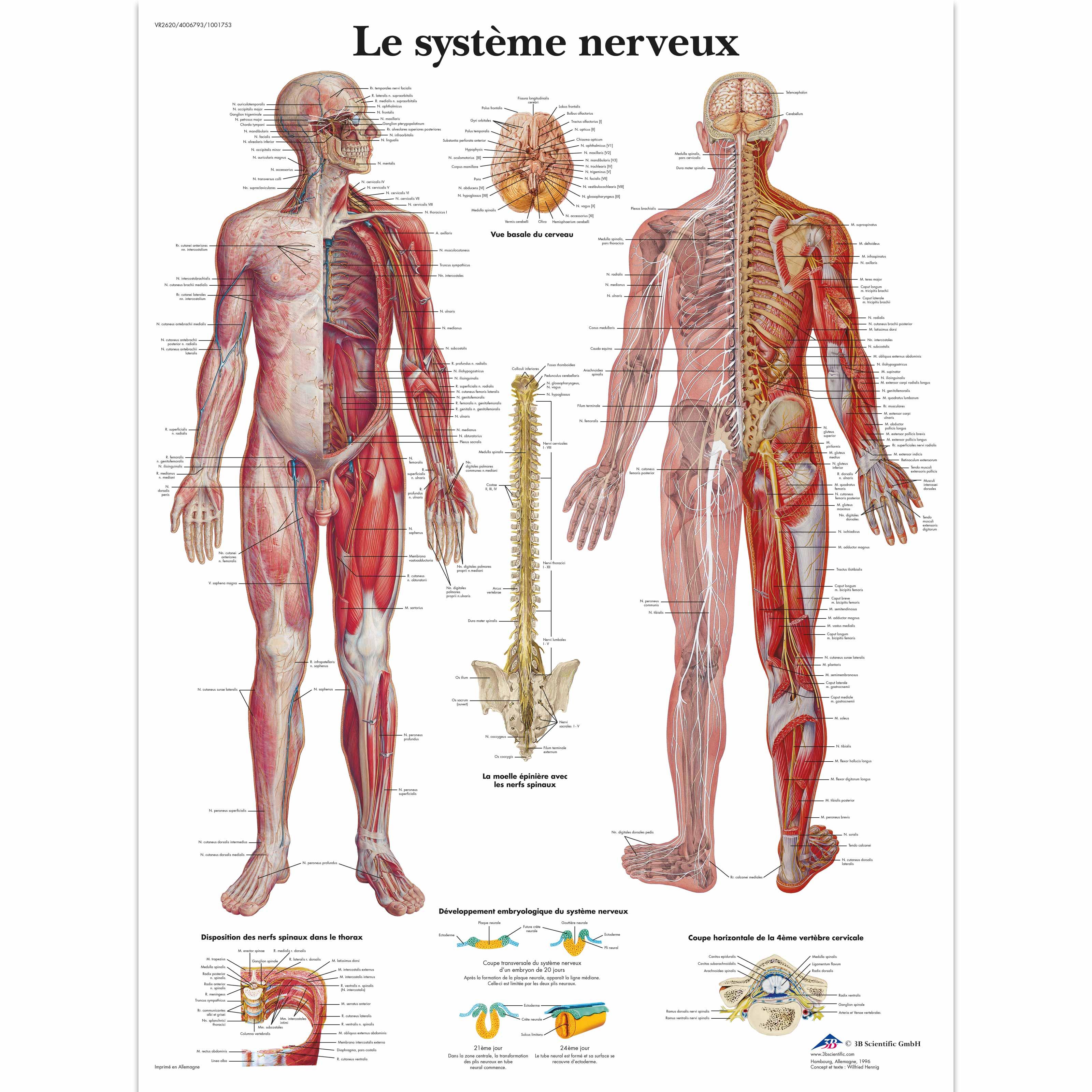 Nett Anatomische Systeme Fotos - Anatomie Ideen - finotti.info