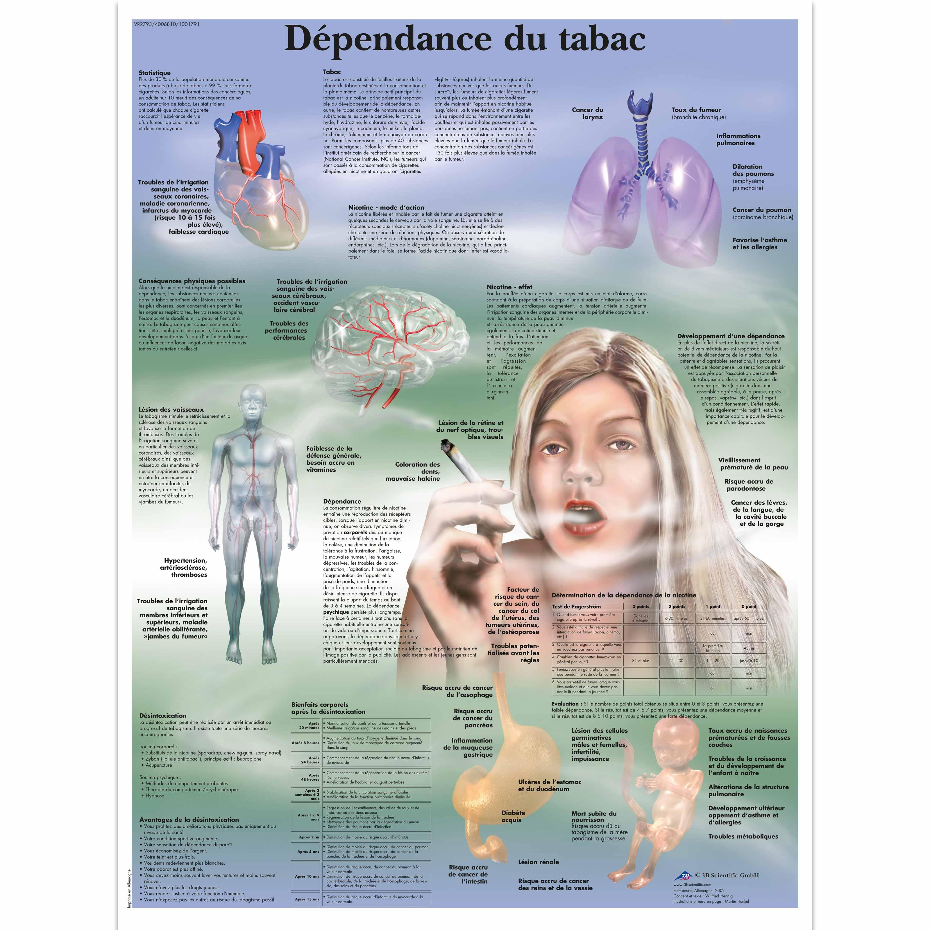 Dépendance du tabac - 4006810 - VR2793UU - Éducation Tabac