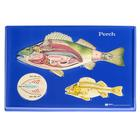 W40235: Perch Model Activity Set