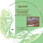 Le muscle, cicatrisation et rééducation, 1012088 [W60104], Therapy Software